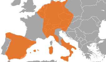 Domain of Charles I of Spain (aka Charles V of the Holy Roman Empire)